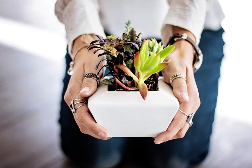 succulents-2347550_960_720
