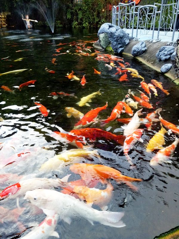 Koi fish Pond at Fantasea