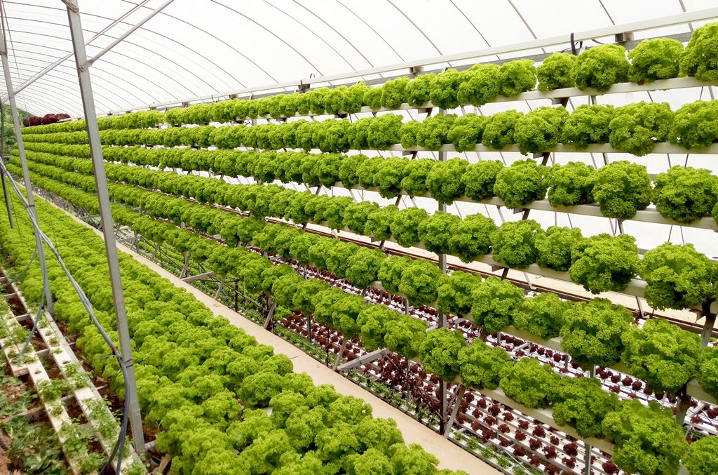 Vertical Salad Farming