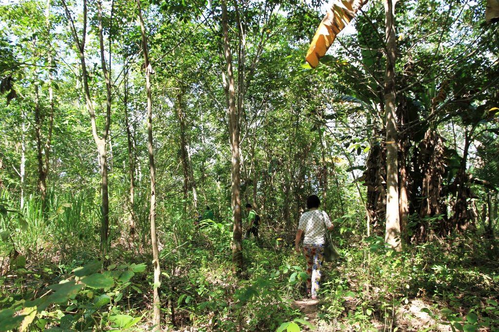 Jungle walk, Kuala Biah, Sabah