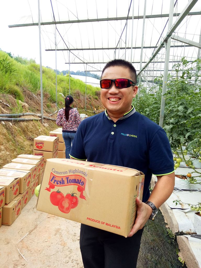 Tomatoes for export